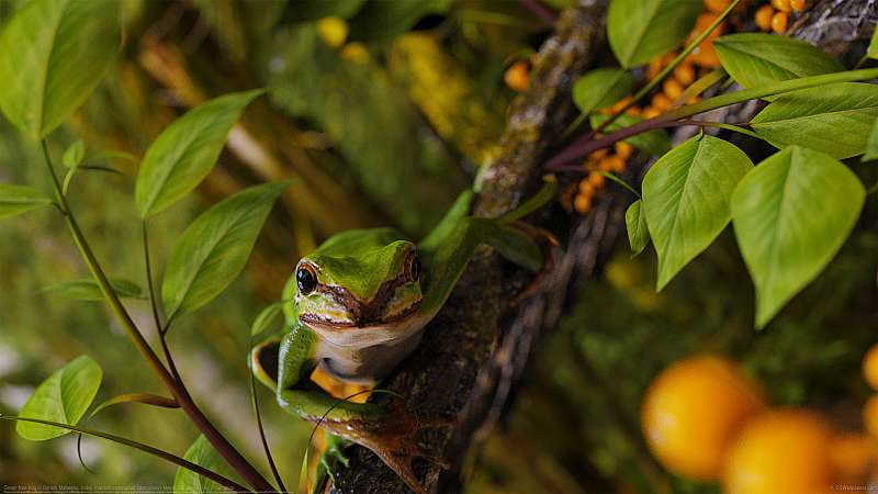 Green tree frog achtergrond