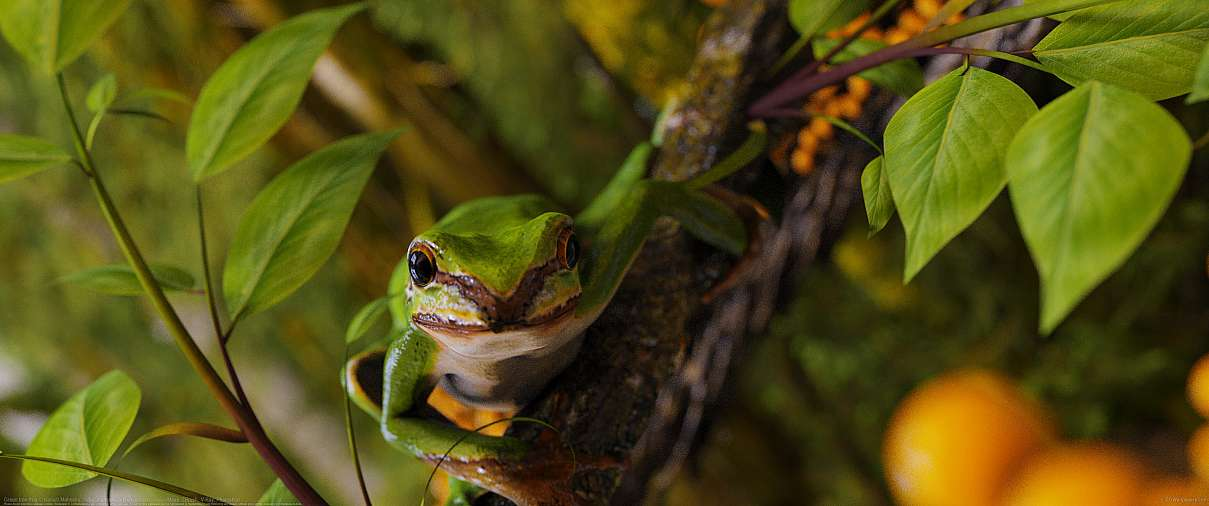 Green tree frog ultrawide achtergrond